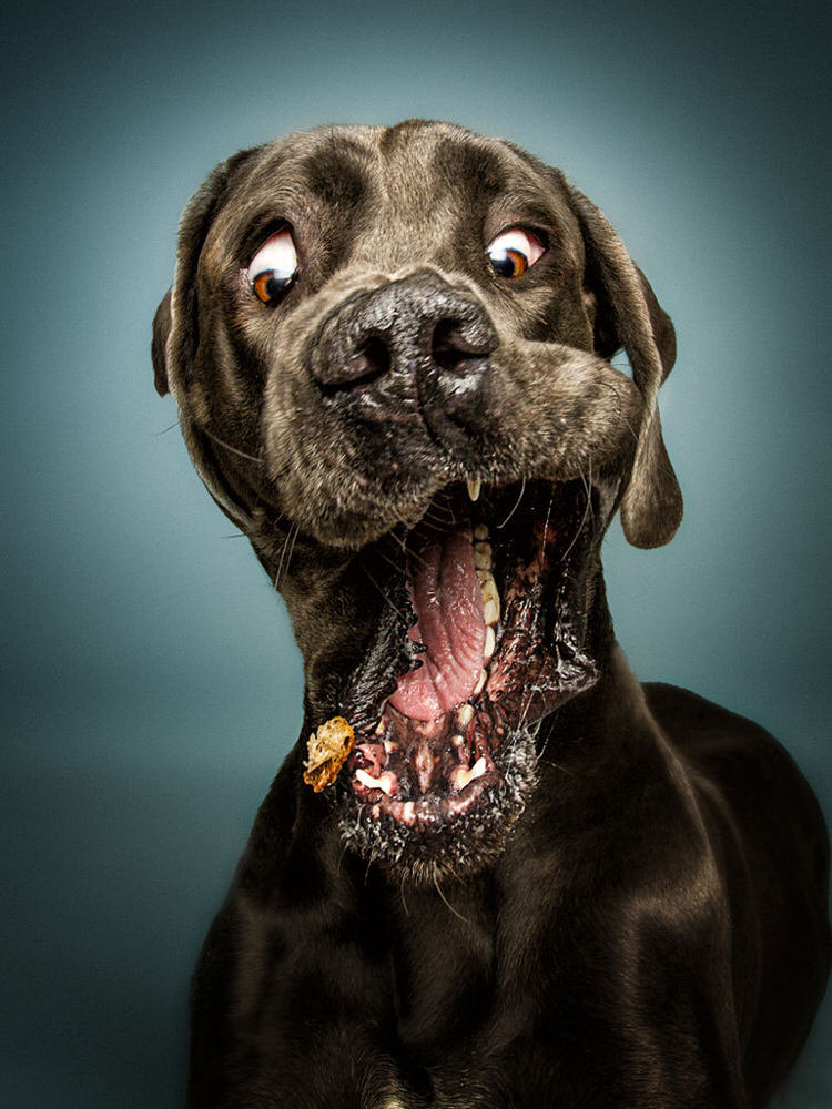 funny-dogs-catching-treats-1