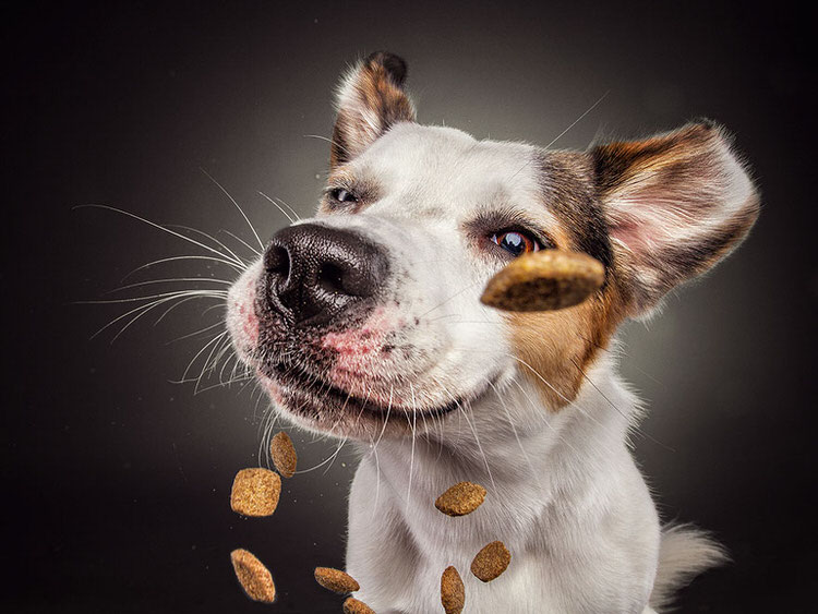 funny-dogs-catching-treats-8