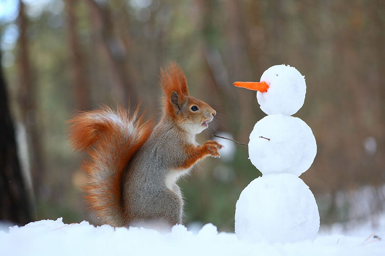 squirrel-photoshoot-vadim-trunov-10