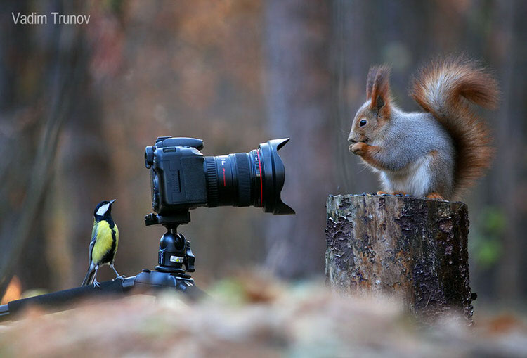 squirrel-photoshoot-vadim-trunov-4