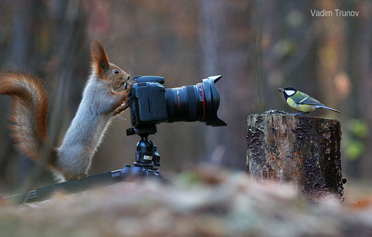 squirrel-photoshoot-vadim-trunov-5