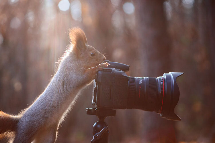 squirrel-photoshoot-vadim-trunov-6
