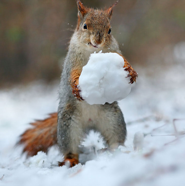 squirrel-photoshoot-vadim-trunov-8