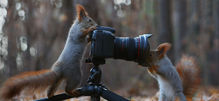 squirrel-photoshoot-vadim-trunov-9