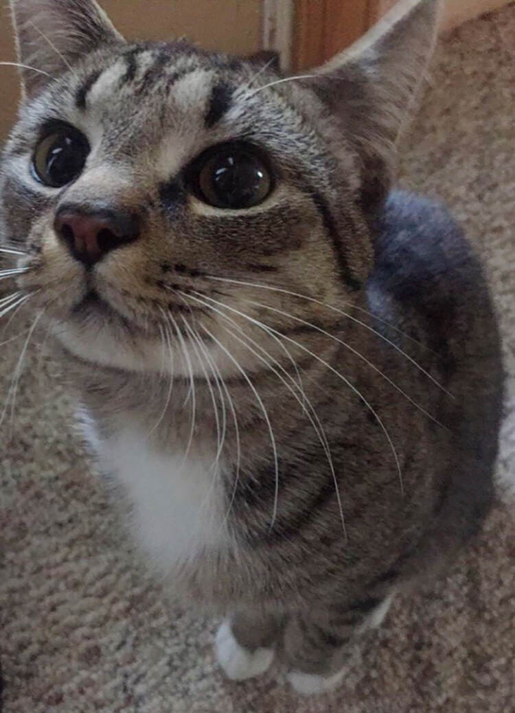 stray-kitten-gets-adopted-8
