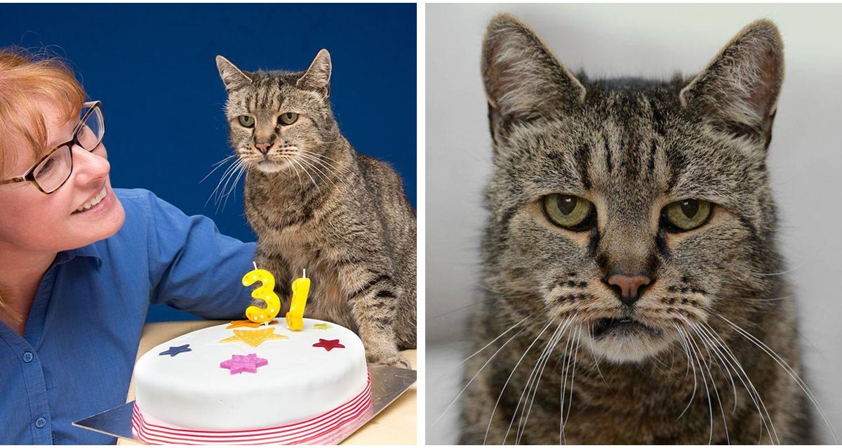 Oldest Cat In The World Just Turned 31 | Top13