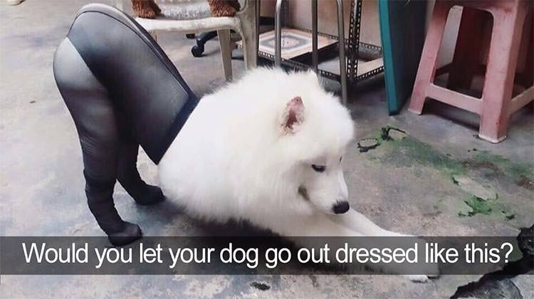 14 funniest dog tweets of all time top13