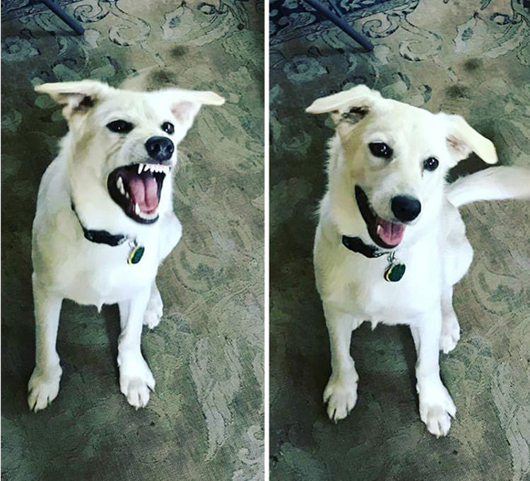 before-after-called-good-boy-6