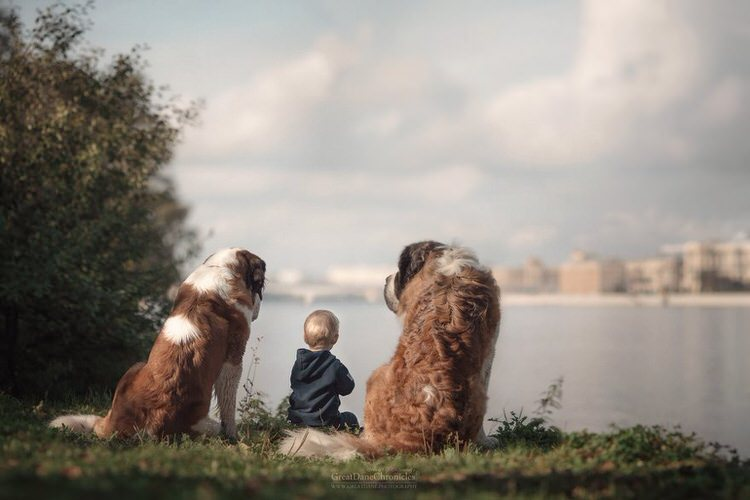 little-kids-big-dogs-andy-seliverstoff-11