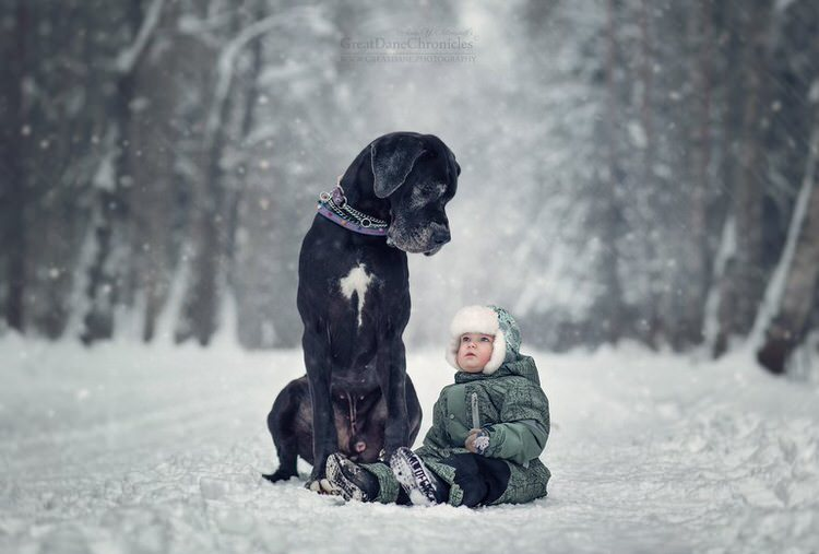 little-kids-big-dogs-andy-seliverstoff-4