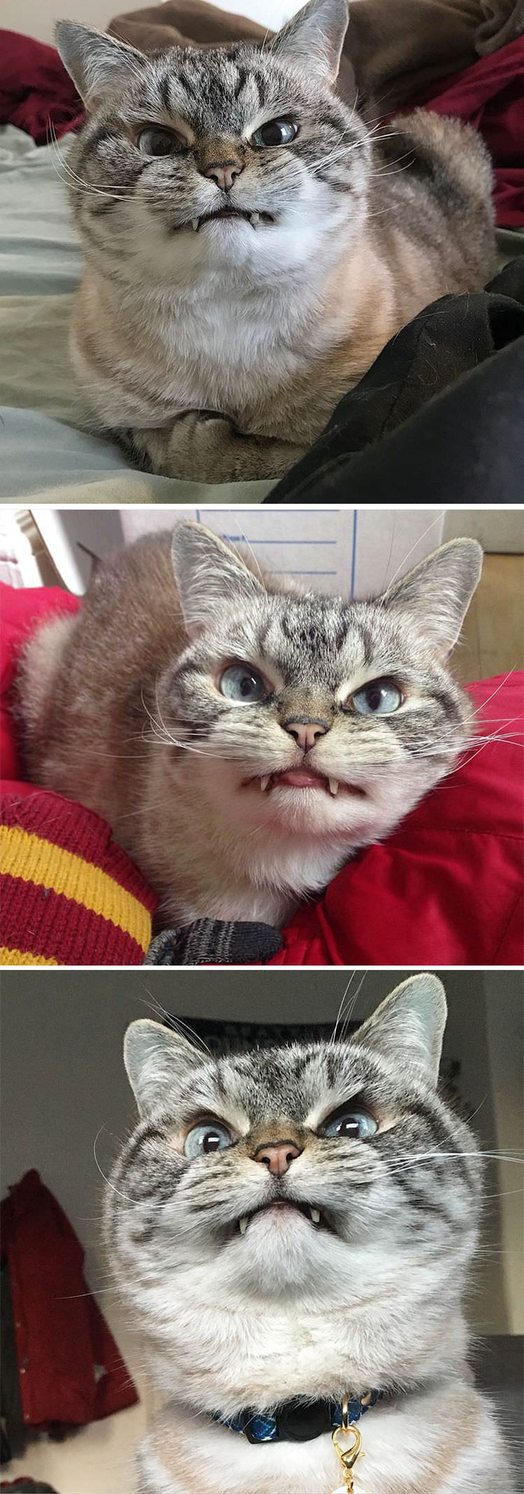 angry-cat-photography-1