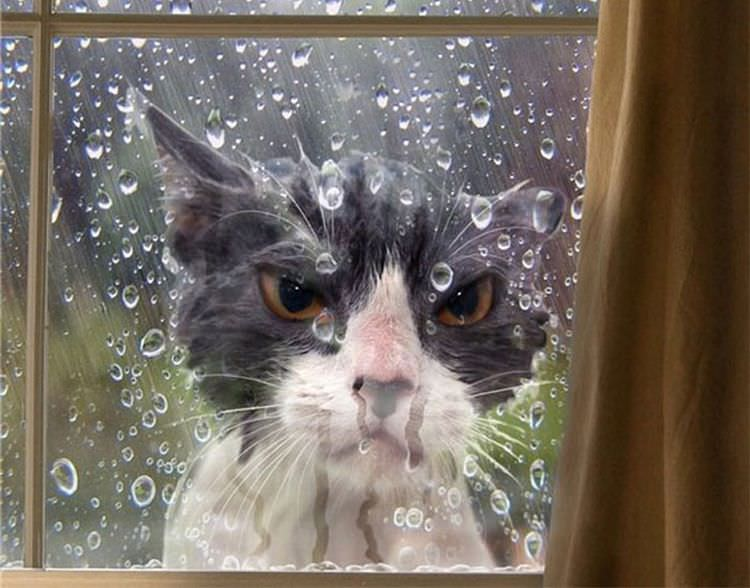 angry-cat-photography-12