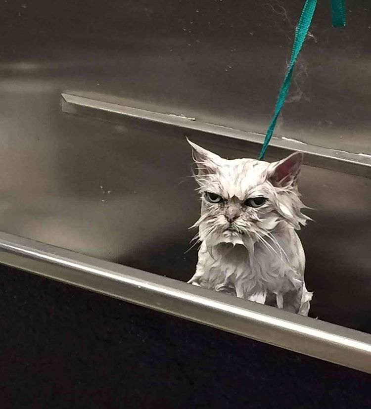 angry-cat-photography-13