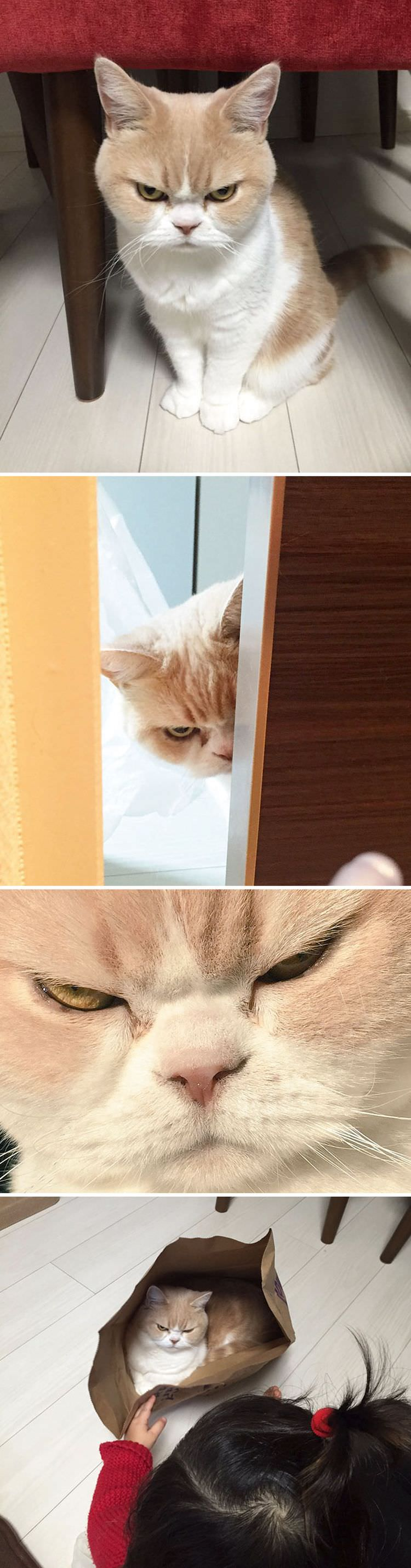 angry-cat-photography-3