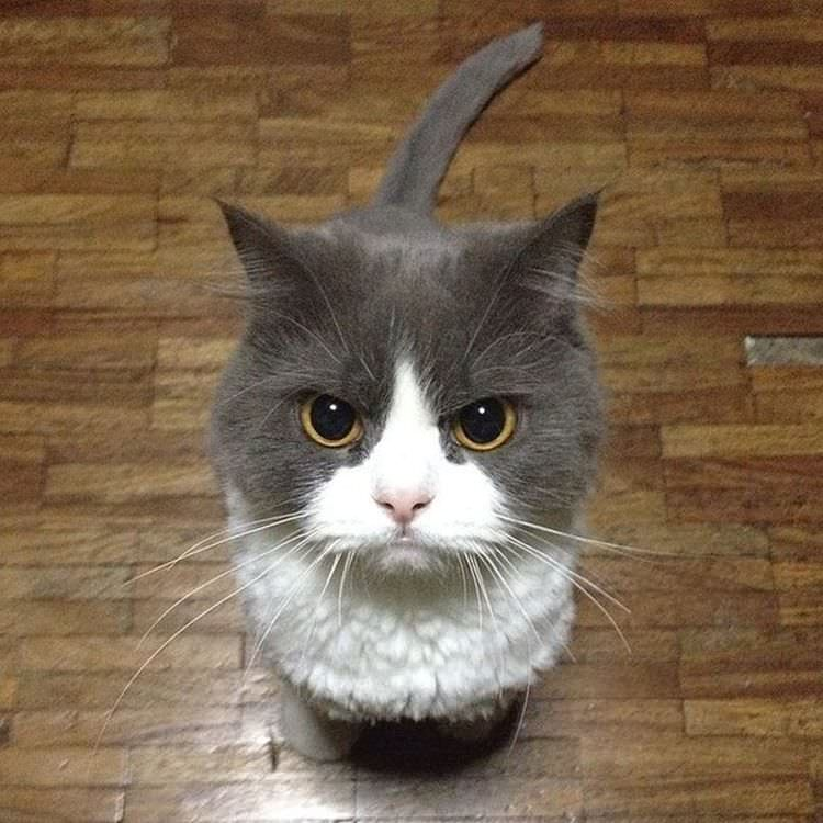 angry-cat-photography-4