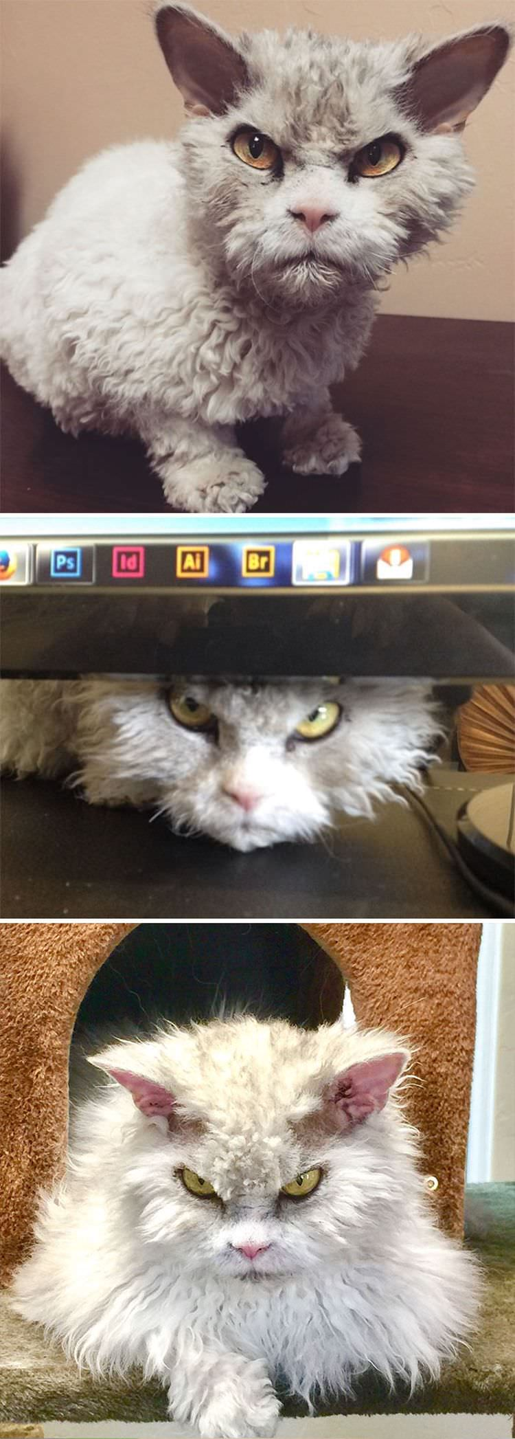 angry-cat-photography-7