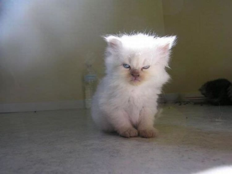 angry-cat-photography-8