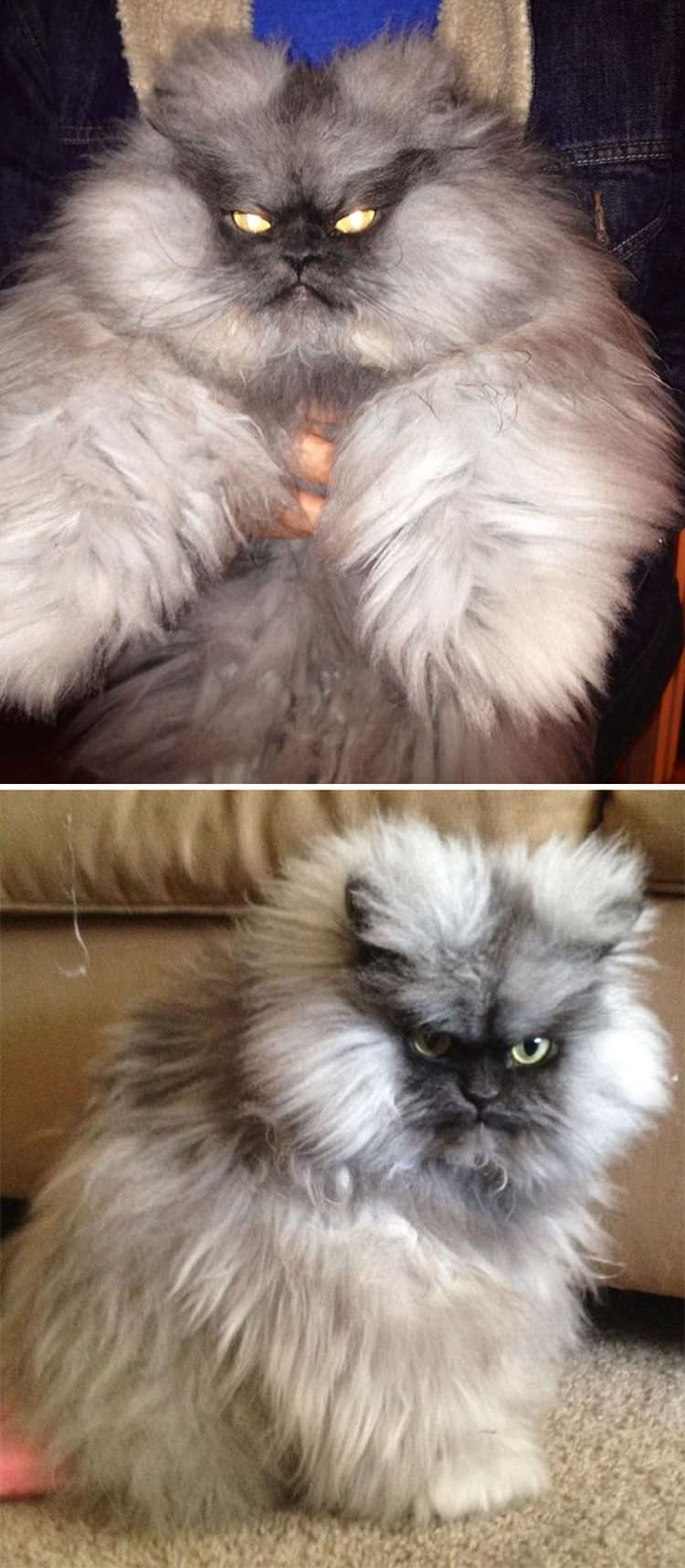 angry-cat-photography-9