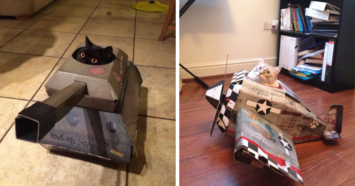 Epic Cardboard Cat Houses Planes Cars And Tanks Top13