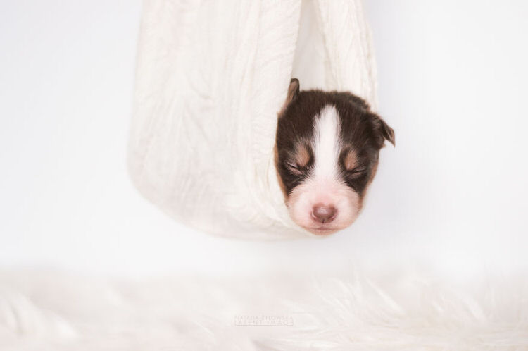 puppies-with-wings-natalia-zylowska-11