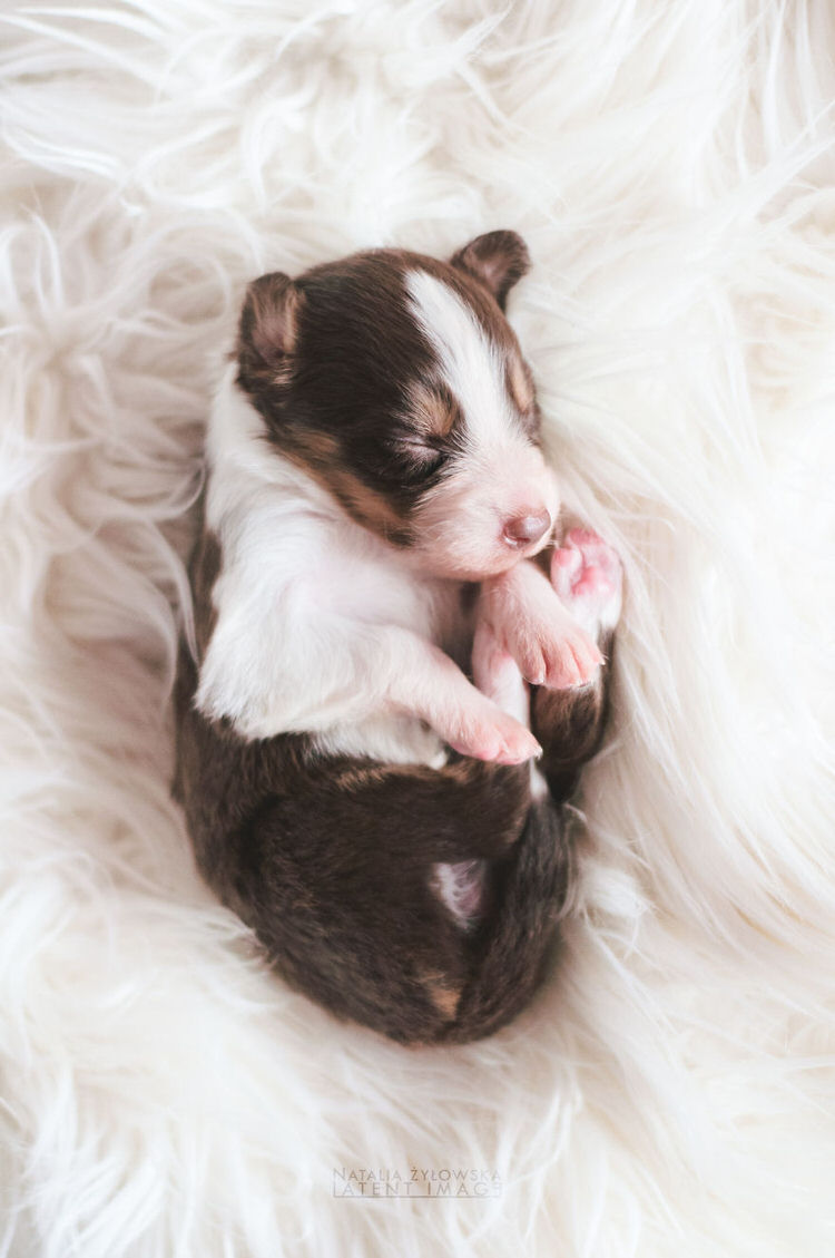 puppies-with-wings-natalia-zylowska-12