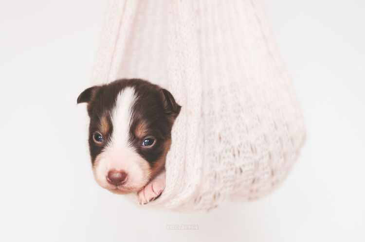 puppies-with-wings-natalia-zylowska-5