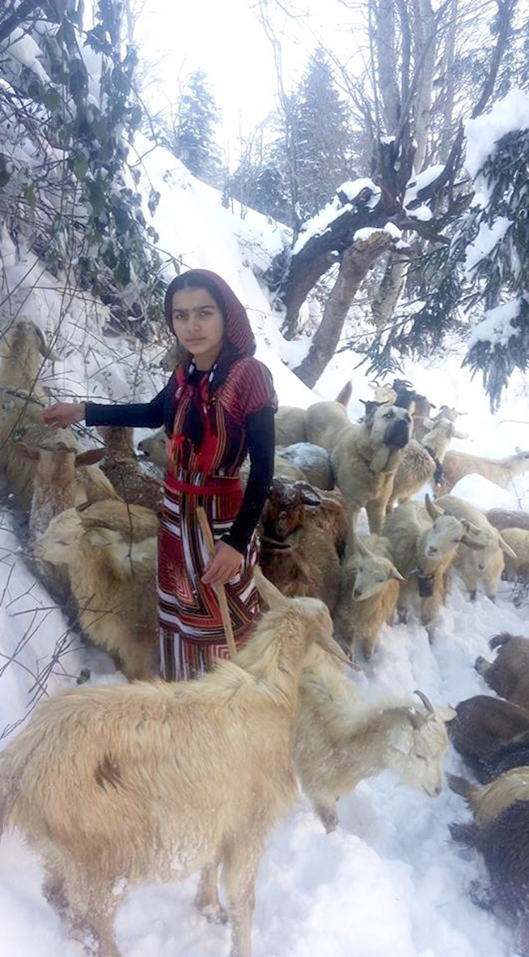 Girl-saves-goat-8