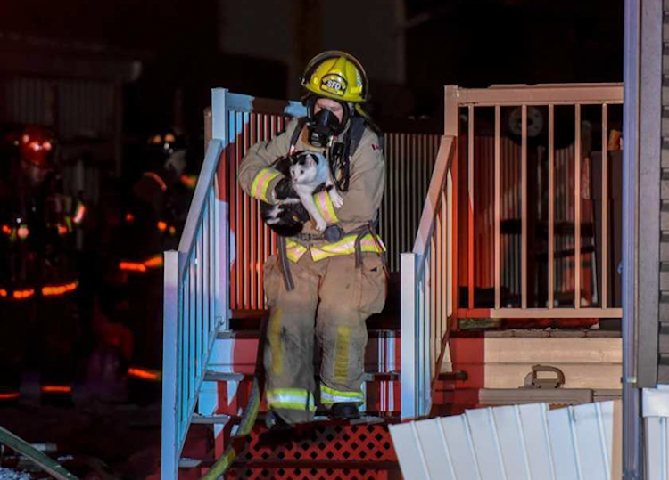 cat-bites-owner-wakes-up-house-fire
