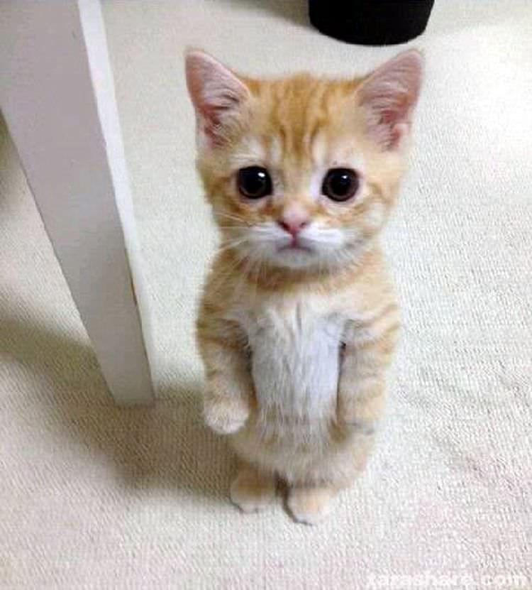 cats puss in boots