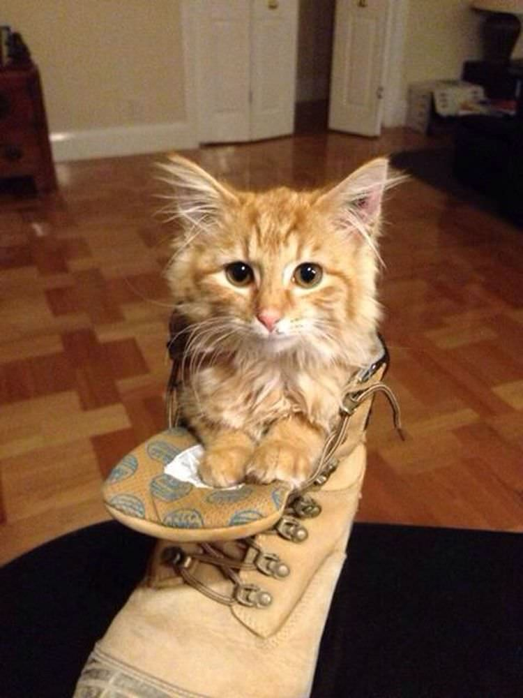 cats puss in boots impressions