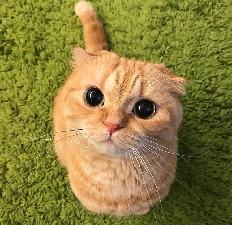 cute cats puss in boots