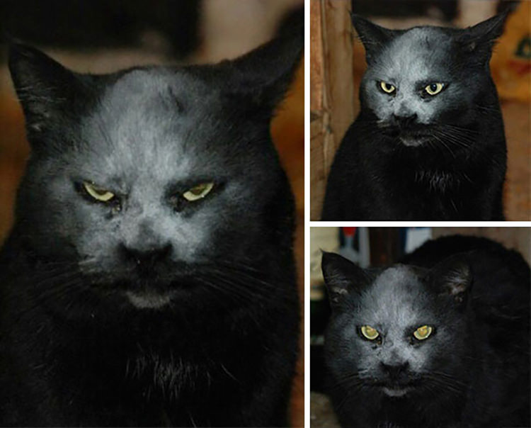 funny cat pictures demons