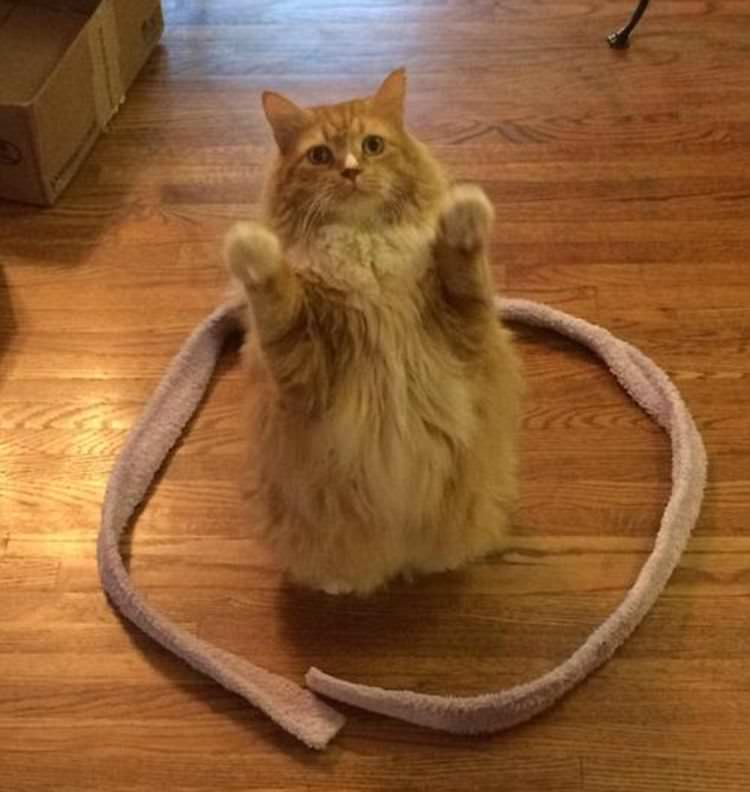 funny cats in circles