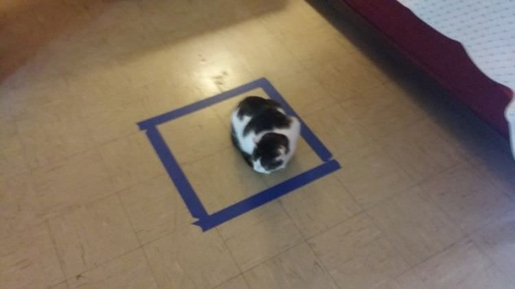 hilarious cats sitting in circles