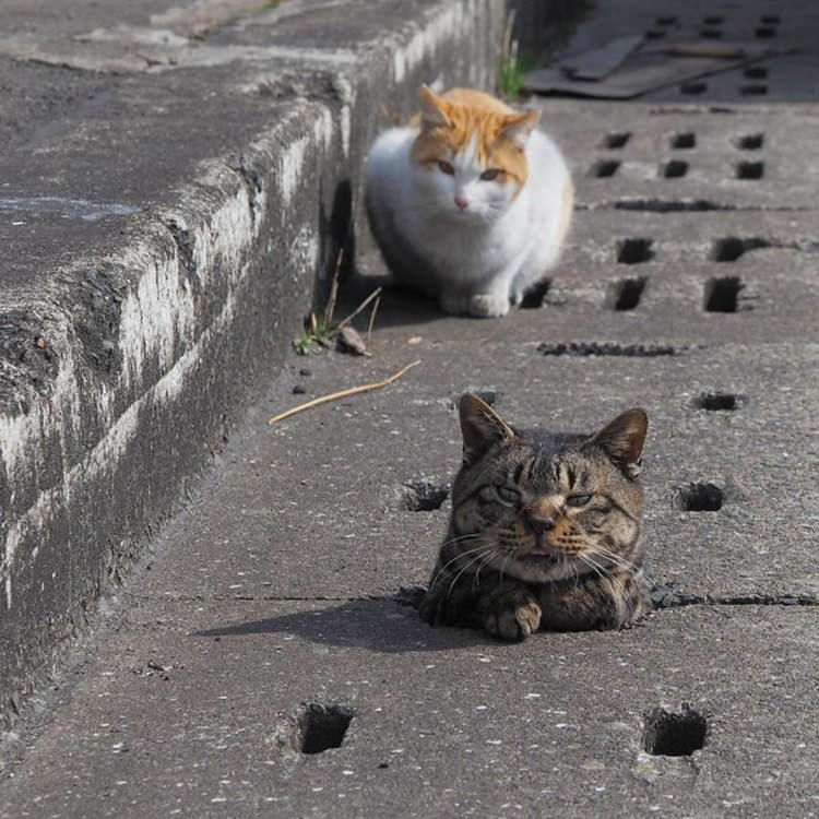 cats playing drain pipe holes