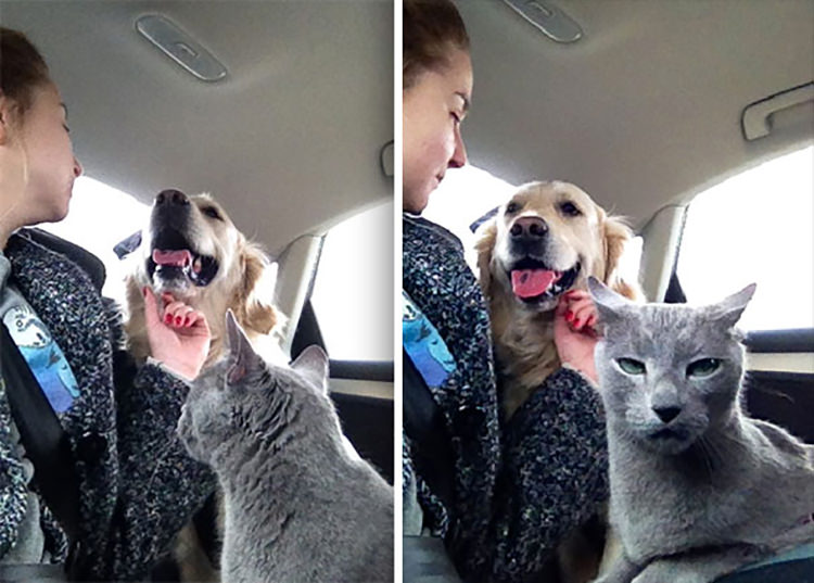 funny dramatic cats