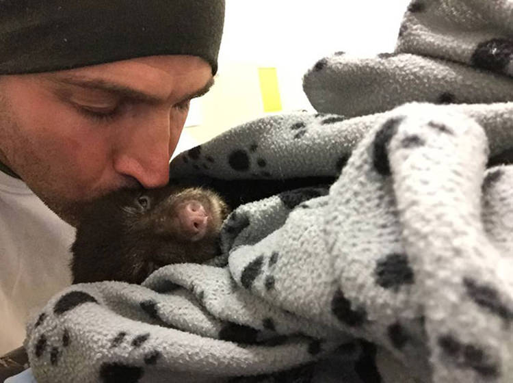 man rescues dying baby bear