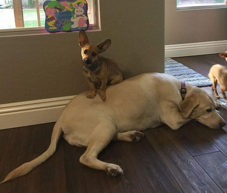 family foster dogs