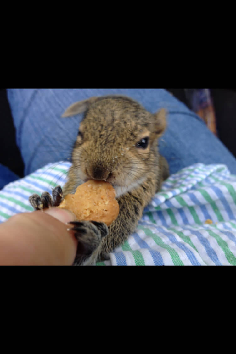 man-finds-tiny-squirrel-8