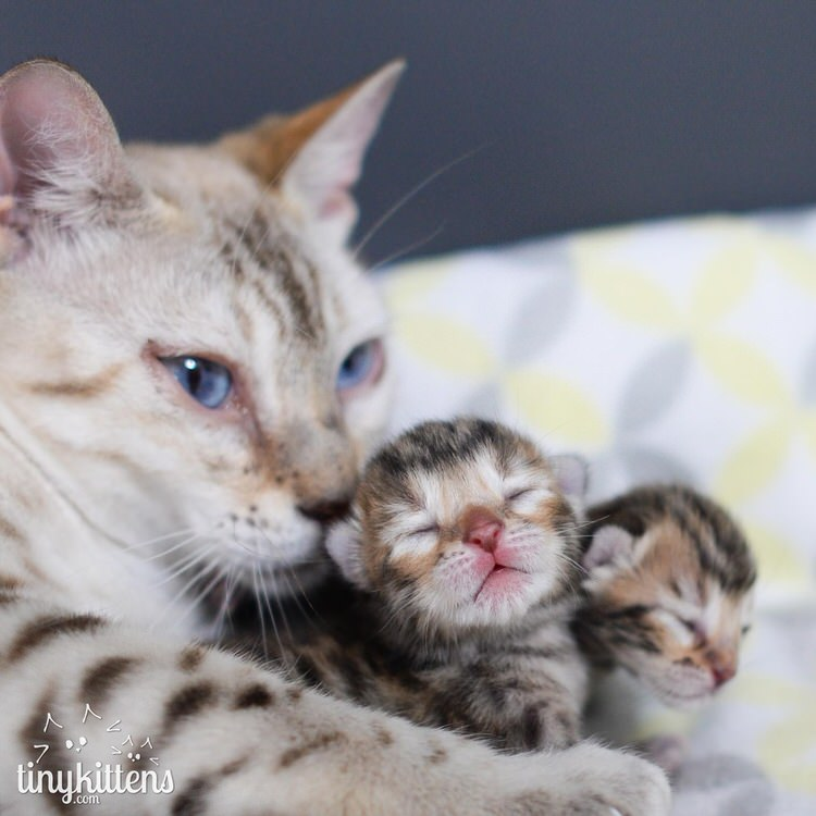 rescued bengal cat and kittens
