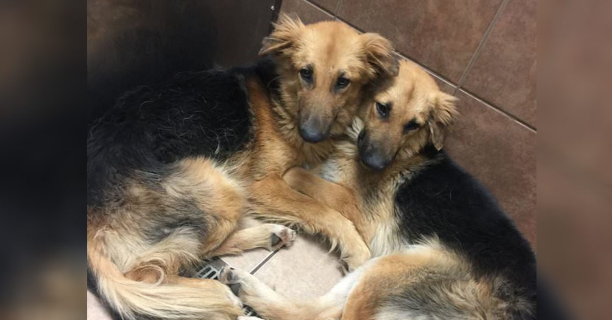 Dogs Dumped At Kill Shelter Were So Scared That They
