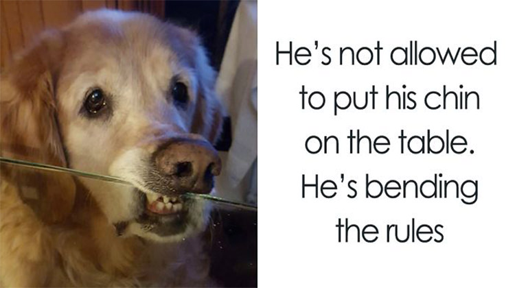 Image of: Memes 13 Hilarious Times Dogs Tried To Bend Human Rules Top13 13 Hilarious Times Dogs Tried To Bend Human Rules Top13