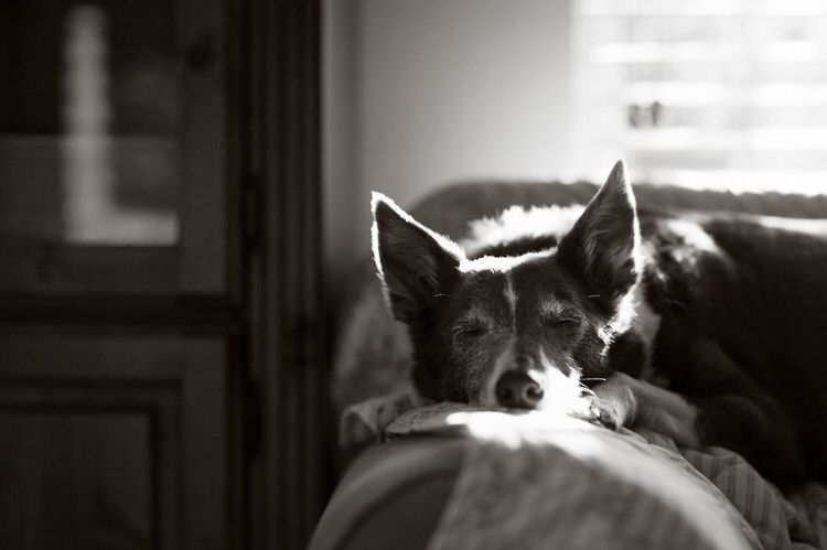 best dog pictures