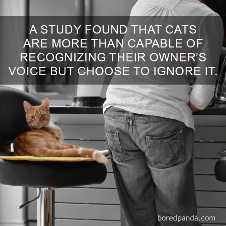 awesome cat facts