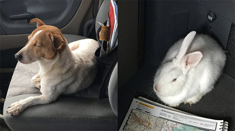 Abandoned Dog Takes His Rescuer To The Woods To Save His Best Friend