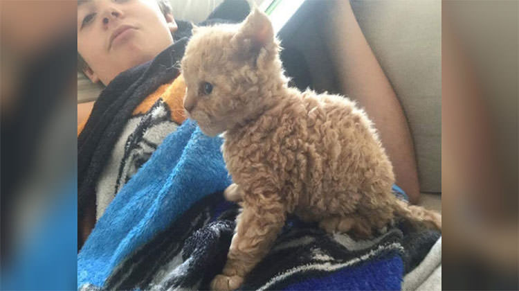 These Curly Haired Kittens Are All Descended From One