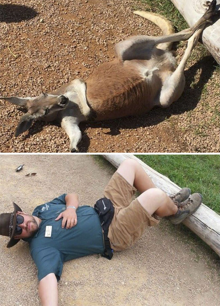 funny zookeepers