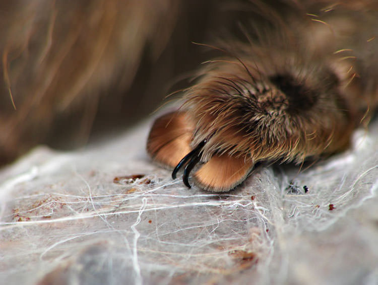 adorable spider paws