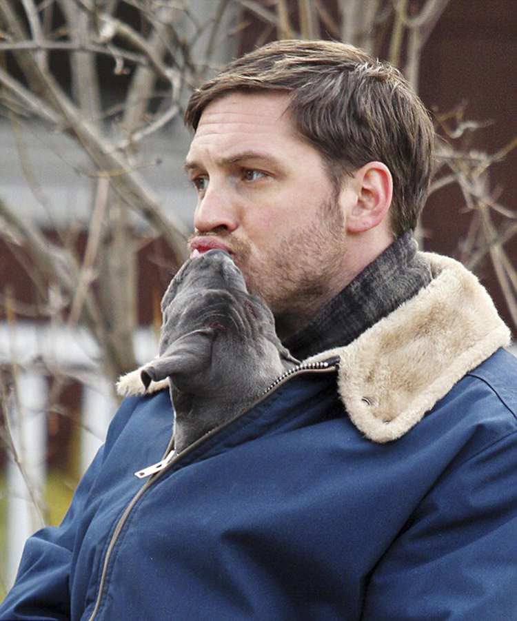 tom hardy with puppies