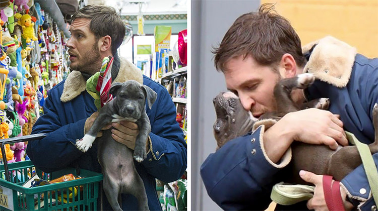 Cute Photos Of Tom Hardy With Dogs Will Melt Your Heart